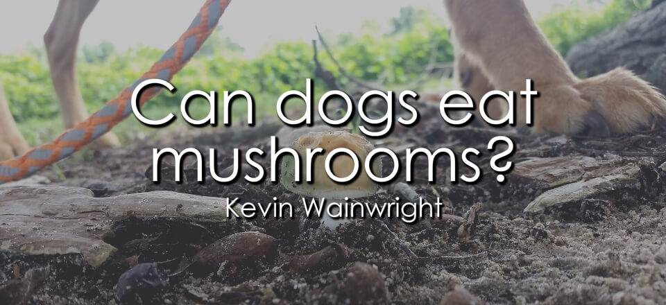Can Dogs Eat Mushrooms? - Banner