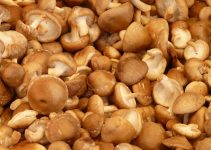 Can Dogs Eat Mushrooms? – Explained