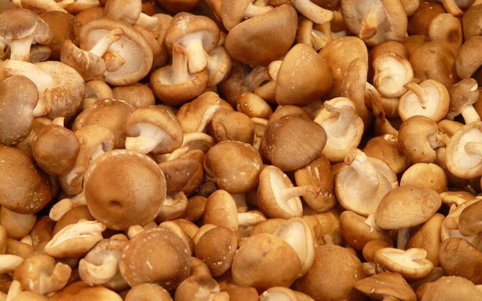 Pile of shiitake mushrooms