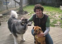 Doggy Dan With 2 Dogs