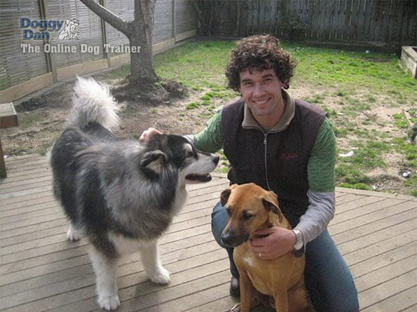 Doggy Dan's Online Dog Trainer Review - Doggy Dan With 2 Dogs