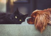 How To Stop Dog Aggression Towards Cats - Featured