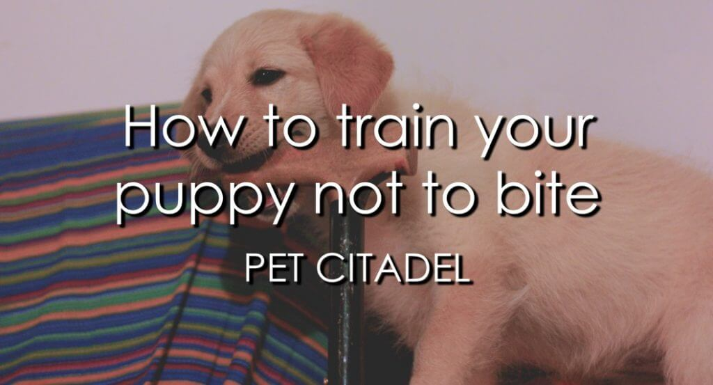How To Train Your Puppy Not To Bite - Image 1