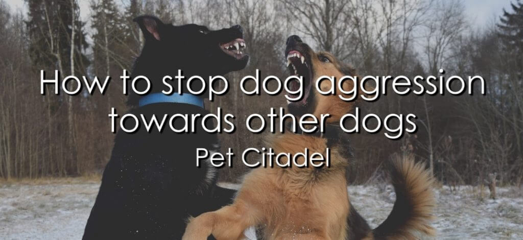 How To Stop Dog Aggression Towards Other Dogs - Image 1