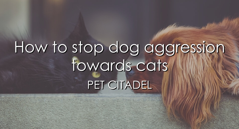 How To Stop Dog Aggression Towards Cats - Image 1