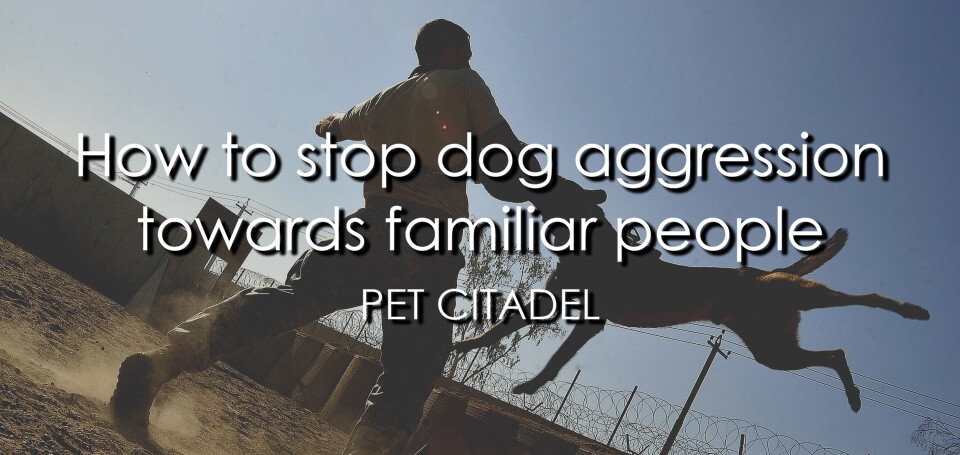 How To Stop Dog Aggression Towards Familiar People - Image 1