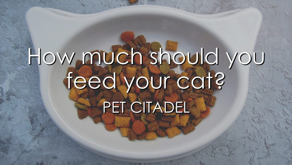 How Much Should You Feed Your Cat? - Image 1