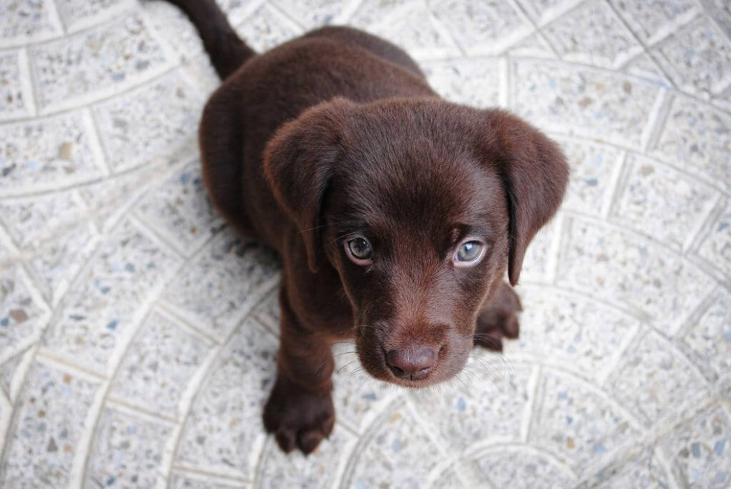 How To Crate Train A Puppy - Image 10