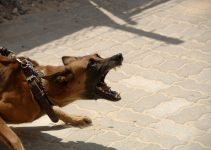 How To Stop Dog Aggression Towards Other Dogs – A Guide