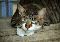 Best Dry Cat Food For Senior Cats - Image 2