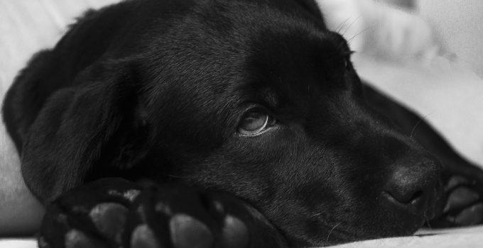 4 Reasons Your Dog's Urine Smells Like Ammonia