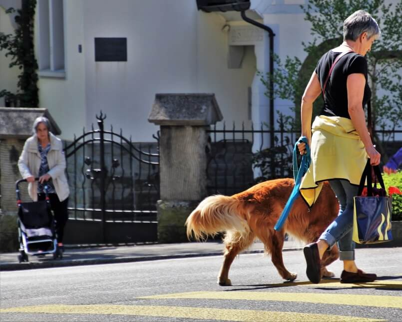 How To Stop Your Dog From Pulling On The Leash - Image 3