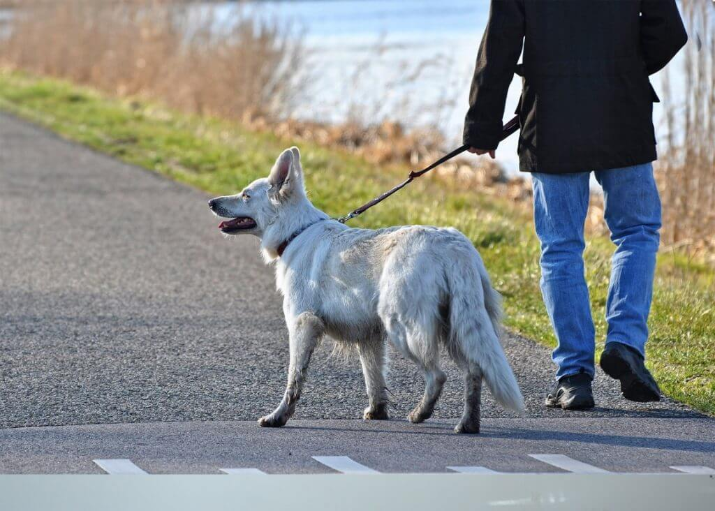 How To Stop Dog Aggression Towards Other Dogs - Image 5