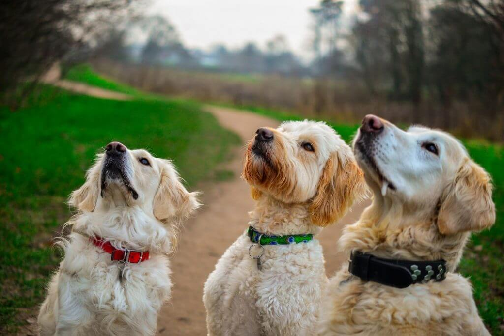 How To Stop Your Dog From Pulling On The Leash - Image 5