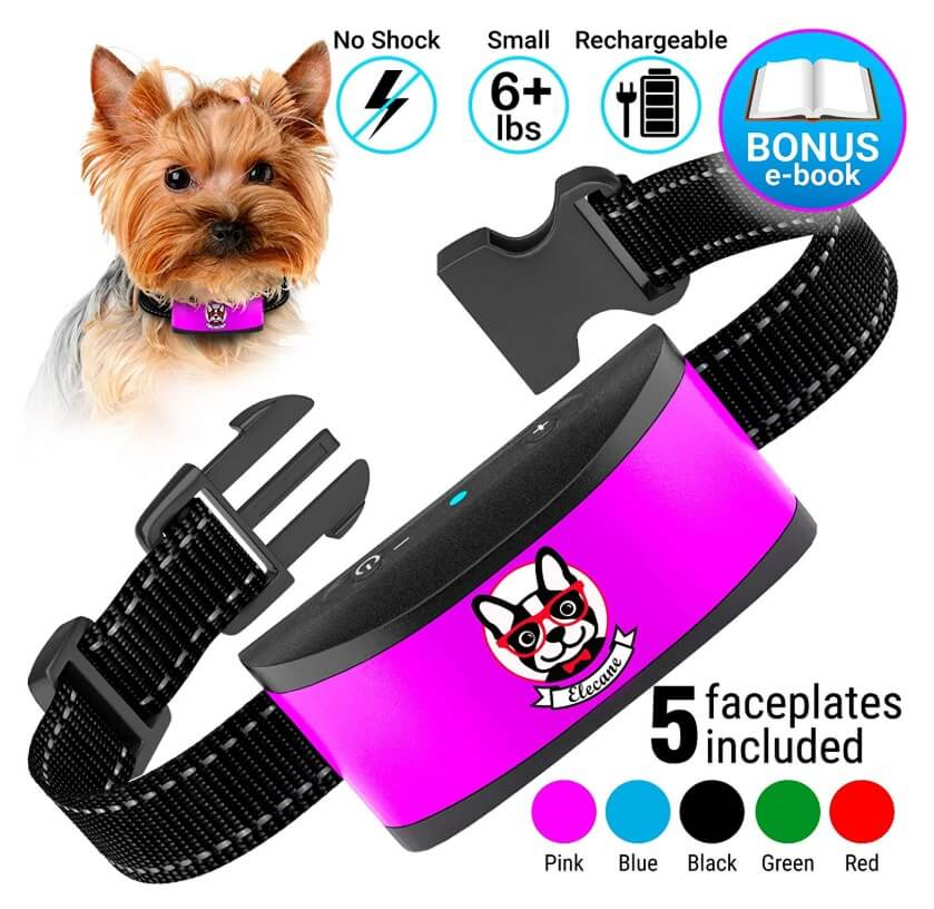 Best Bark Collars For Small Dogs - Elecane Small Dog
