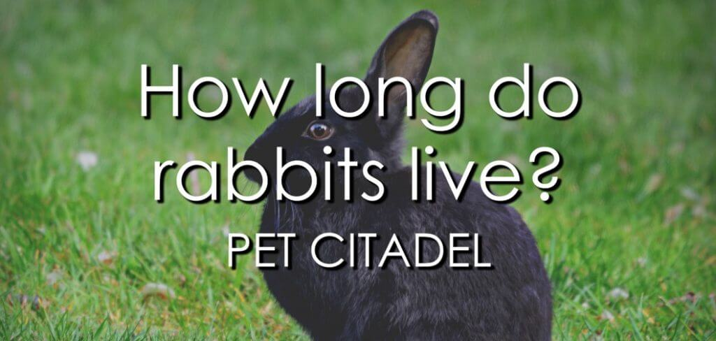 How Long Do Rabbits Live? - Banner Image