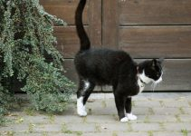 How To Stop Your Cat From Spraying – Best Methods