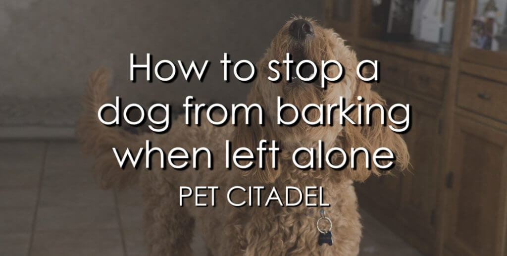 How To Stop A Dog Barking When Left Alone - Banner Image