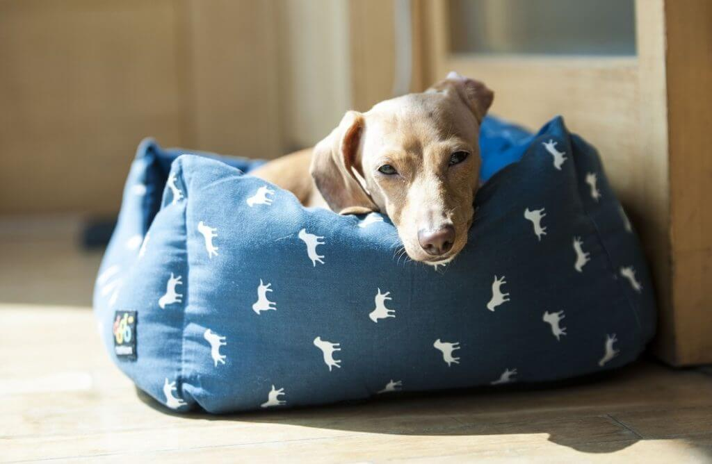 How To Stop A Dog Barking When Left Alone - Image 4