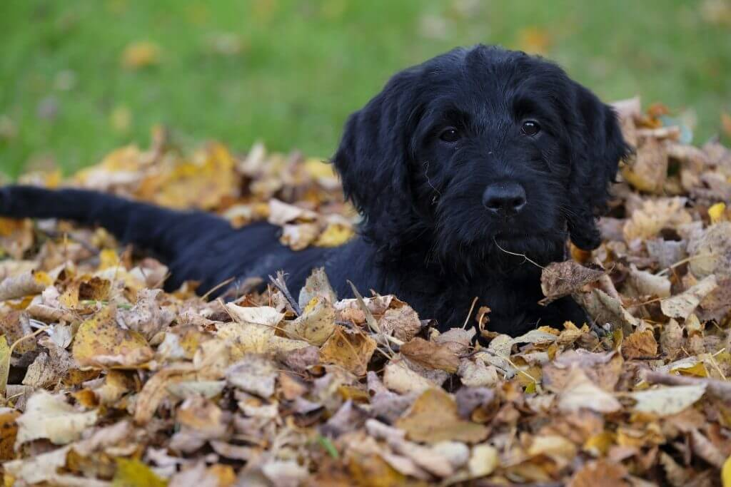 When Do Dogs Stop Growing? - Mixed Breed