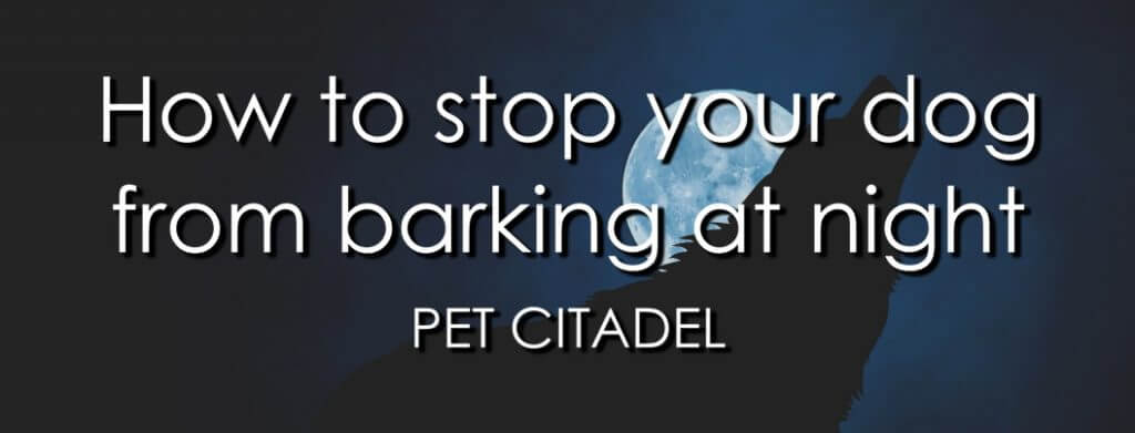 How To Stop Your Dog From Barking At Night - Banner Image