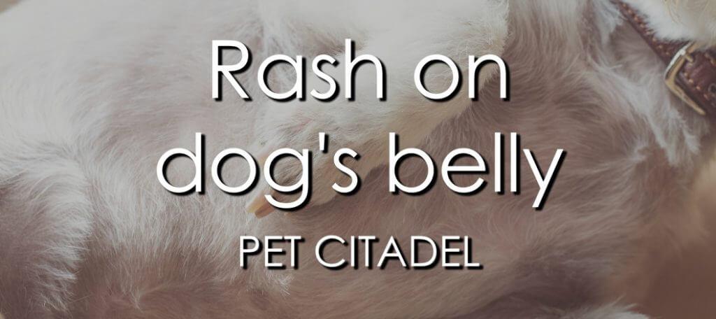 Rash On Dog's Belly - Banner Image