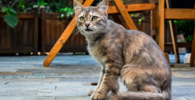 How Old Is Your Cat? – Determining Your Cat's Age