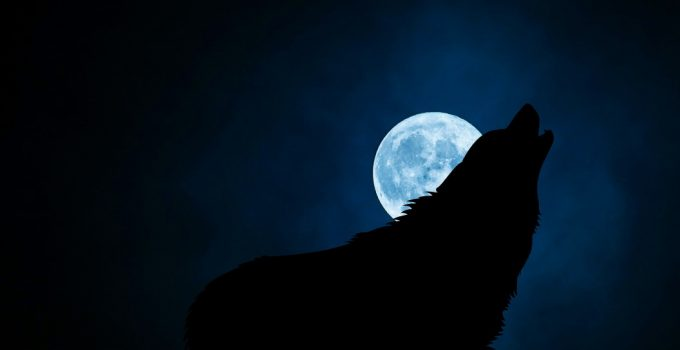 How To Stop Your Dog From Barking At Night – 6 Proven Methods
