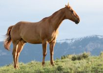 How Much Does A Horse Cost? – What To Consider