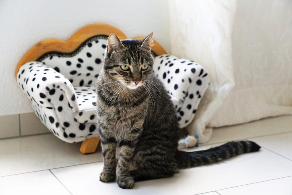 How To Stop A Cat From Peeing On The Bed - Image 1