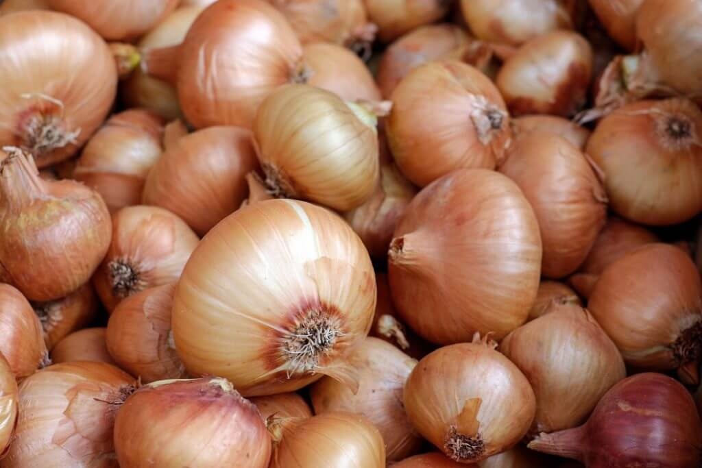 Are Onions Bad For Dogs? - Image 2