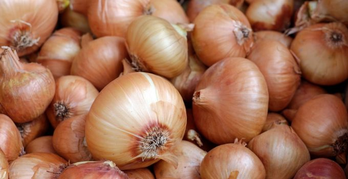 Are Onions Bad For Dogs? – Explained
