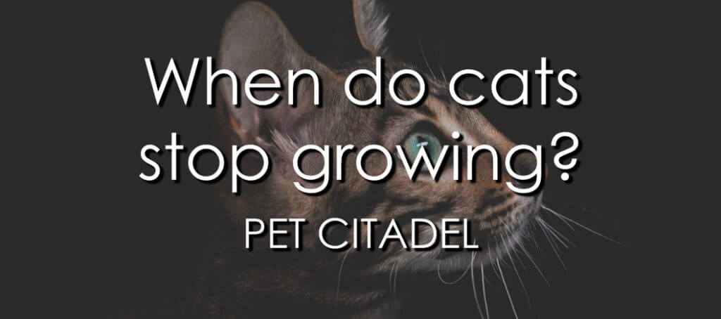 When Do Cats Stop Growing? - Banner Image