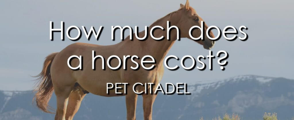 How Much Does A Horse Cost? - Banner Image