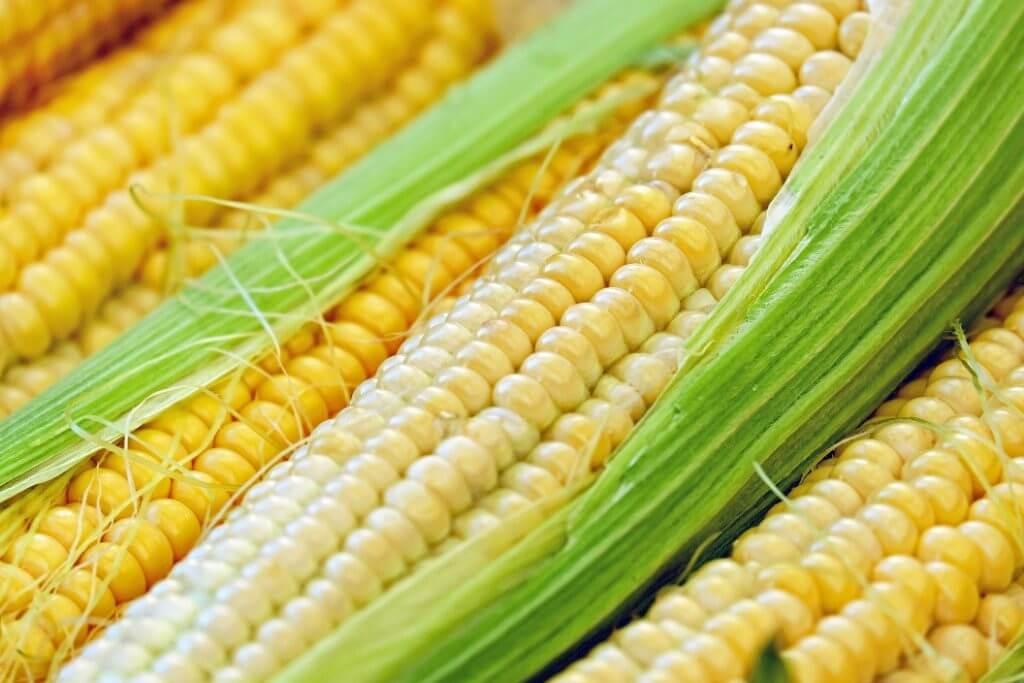 Rash On Dog's Belly - Corn