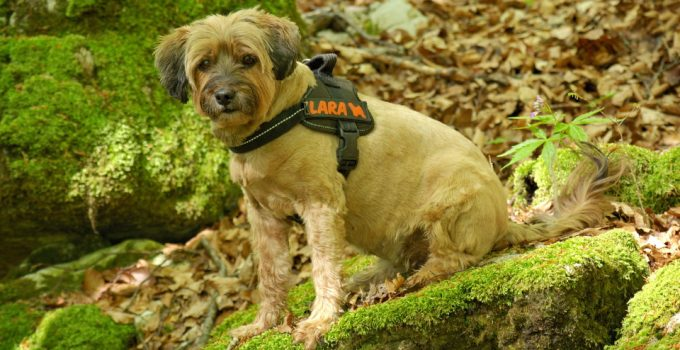 Best Dog Harnesses For Hiking – 2021 Review & Buying Guide