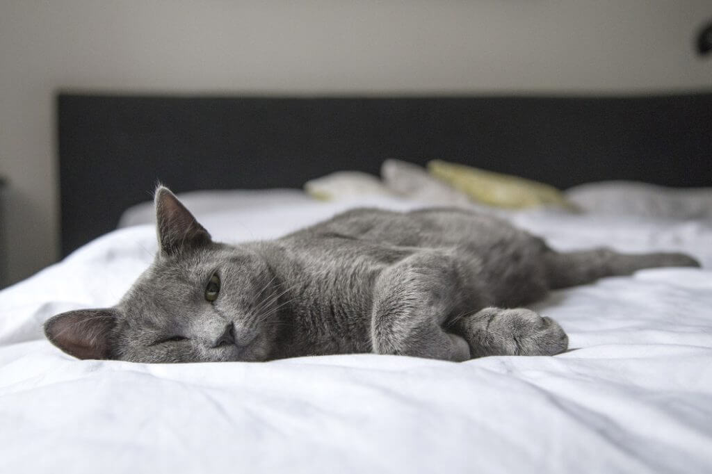 How To Stop A Cat From Peeing On The Bed - Image 3