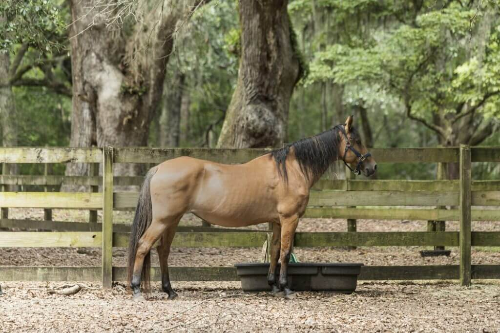 How Much Does A Horse Cost? - Image 4