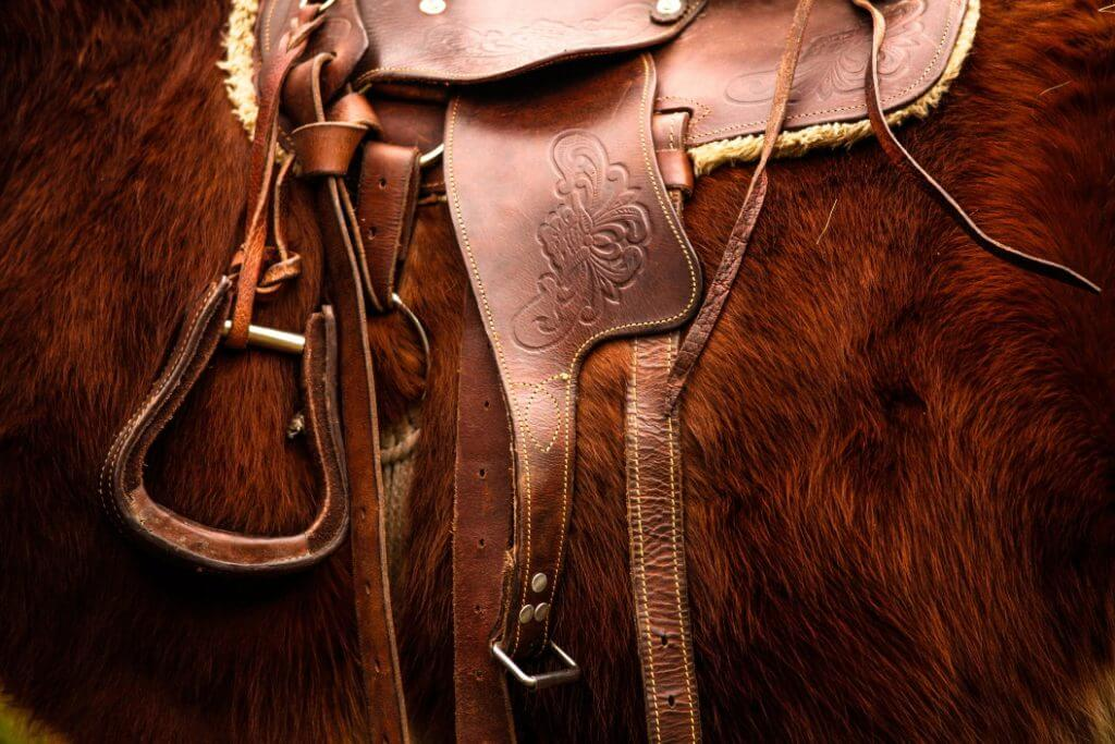 How Much Does A Horse Cost? - Image 5