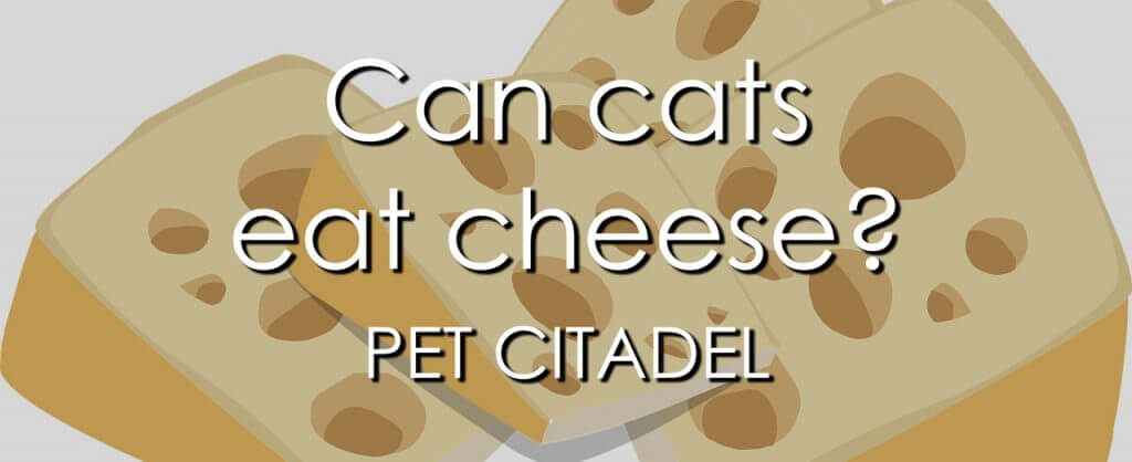 Can Cats Eat Cheese? - Banner