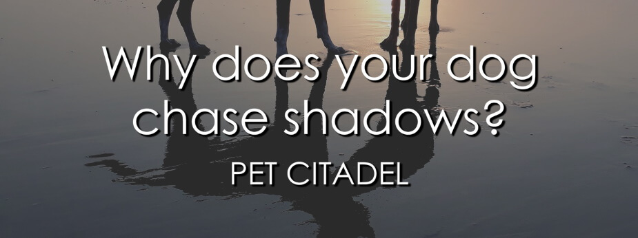 Dog Chases Shadows - Banner