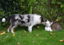 How To Stop Your Dog From Chasing Cats – Best Solutions
