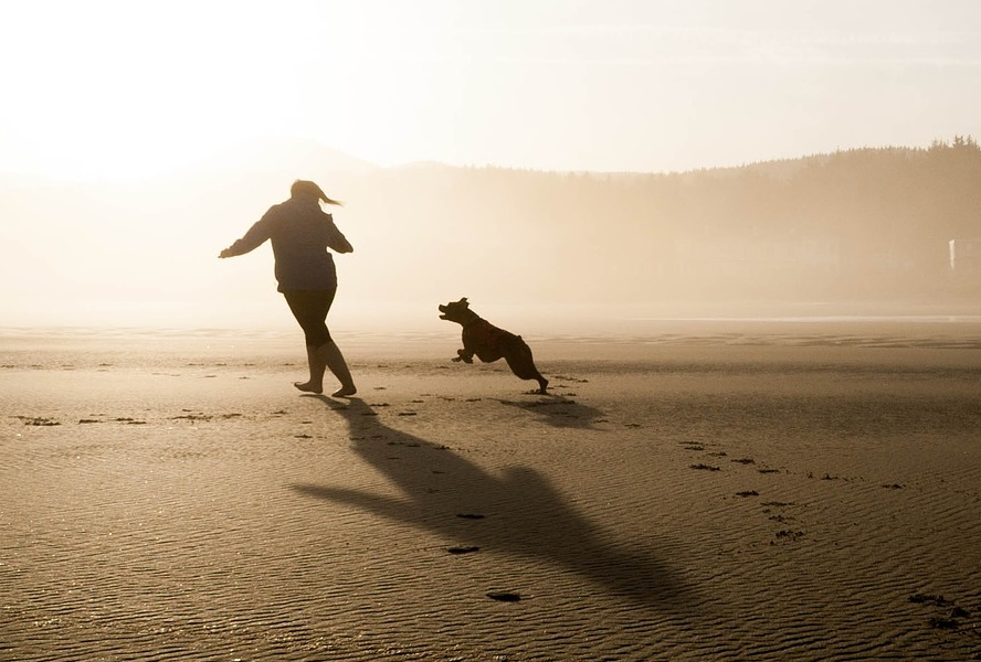 Dog Chases Shadows - Image 1
