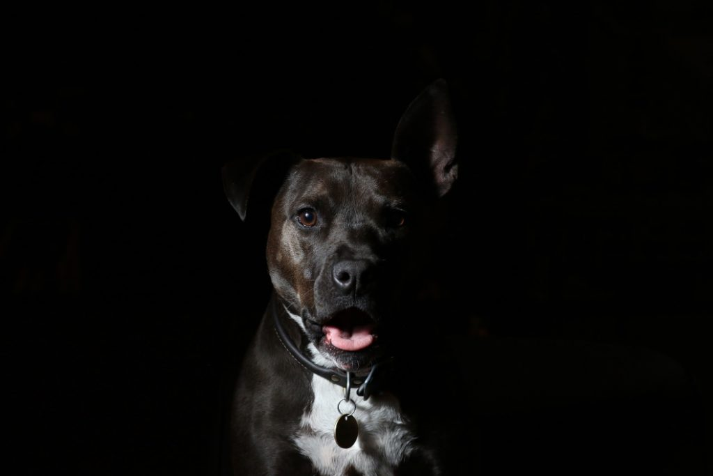 Dog Chases Shadows - Image 3