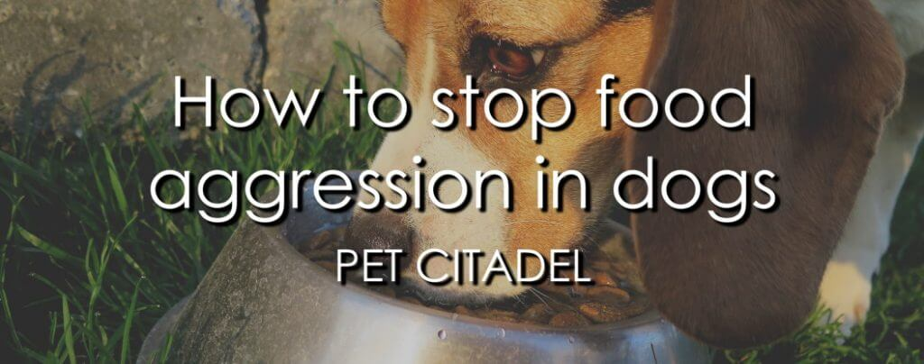 How To Stop Food Aggression In Dogs - Banner