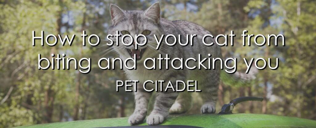 How To Stop Your Cat From Biting & Attacking You - Banner Image