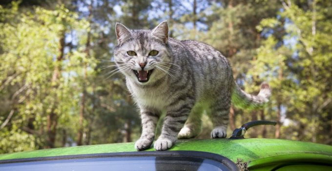 How To Stop Your Cat From Biting & Attacking You – 7 Strategies