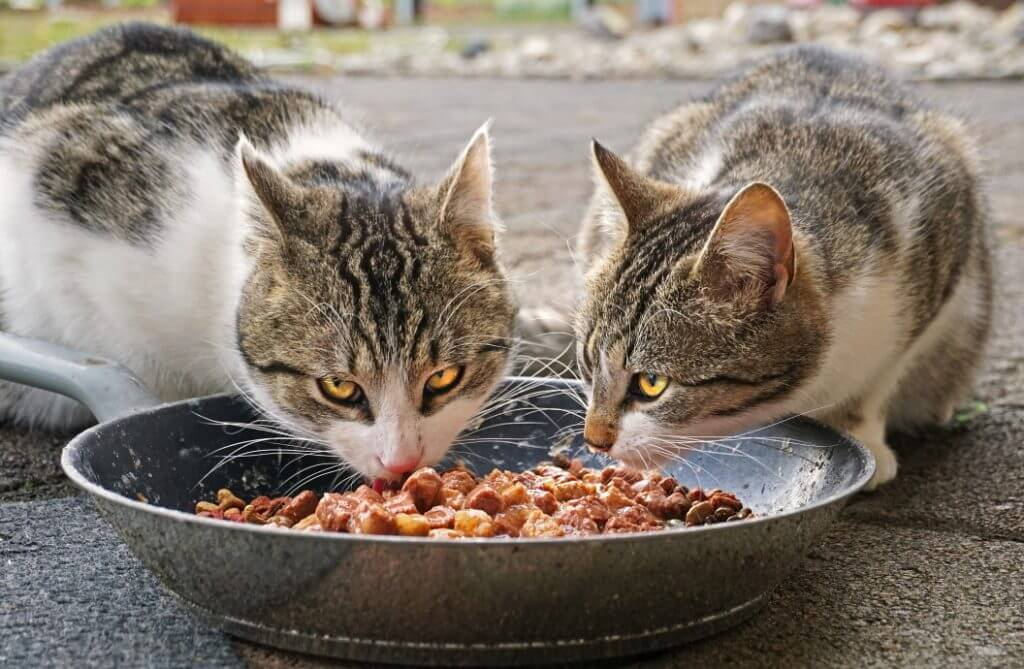 Cats eating food from a bowl