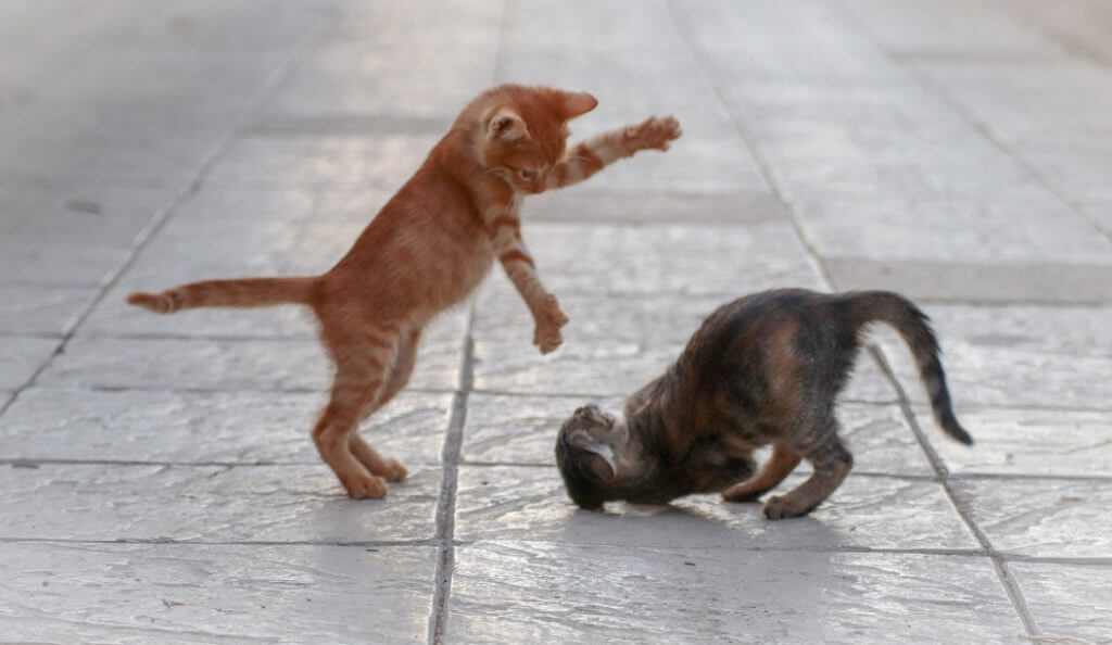 Cats fighting on a stone floor