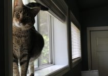 Why Your Cat Is Peeing Everywhere – Causes & Solutions